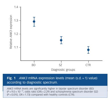ank3 expression