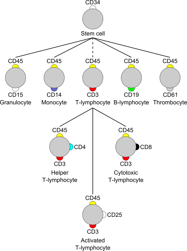 Cluster_of_differentiation