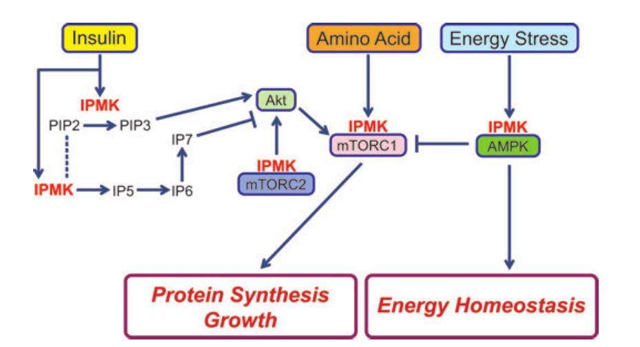 IPMK metabolism